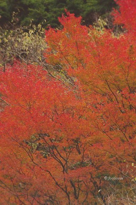2014-11-16_092x.jpg